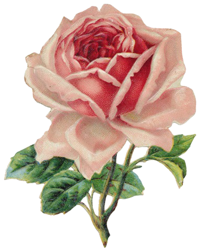 free clipart roses flowers - photo #19
